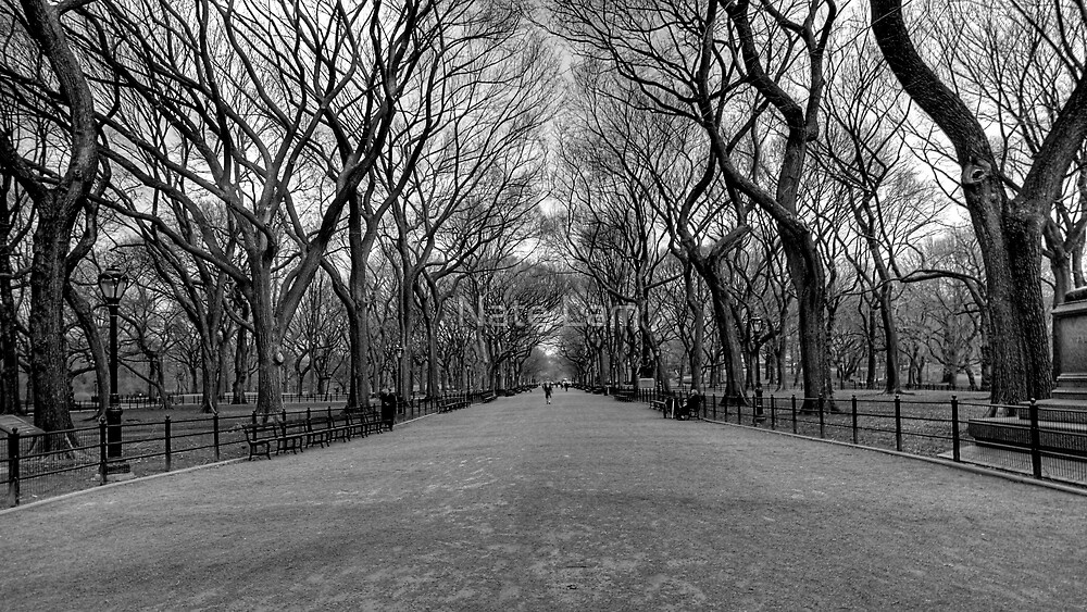 A Walk to Remember by Nate Lam