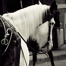 White Horse - Stockyards - Fort Worth, Texas by jphall