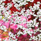 Dogwood Blossom Lattice by Oscar Gutierrez