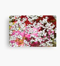 Dogwood Blossom Lattice Canvas Print