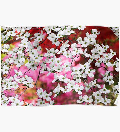 Dogwood Blossom Lattice Poster
