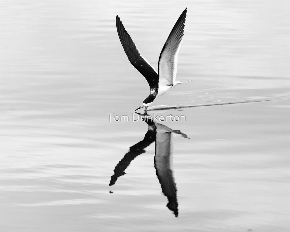 Black skimmer Skimming-black & white by Tom Dunkerton