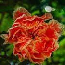 Unknown Beauty by Bryan D. Spellman