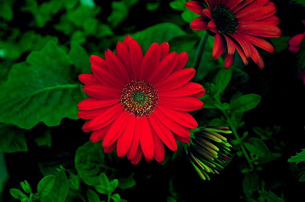 MEXICAN RED by RoseMarie747
