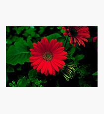 MEXICAN RED Photographic Print
