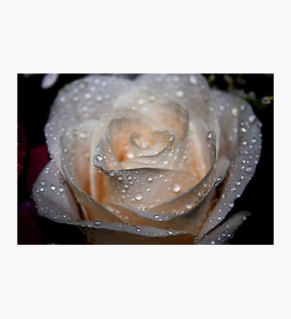 Rose and Raindrops 2 Photographic Print