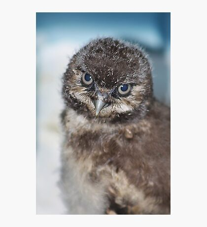 Burrowing Owlet Photographic Print