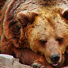 EURASIAN BROWN BEAR by Johan  Nijenhuis