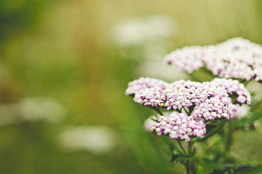Small Pink Flowers by hipsterpictures
