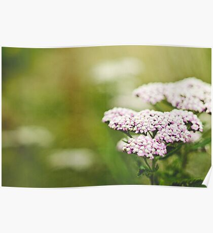 Small Pink Flowers Poster