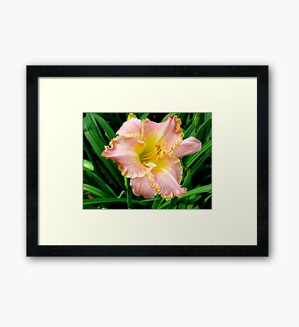 Just Peachy! Framed Print