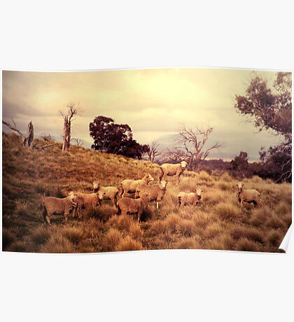 Sound of Sheep Poster