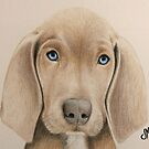 Nica the Slovakian Rough Haired Pointer by DrawingMom