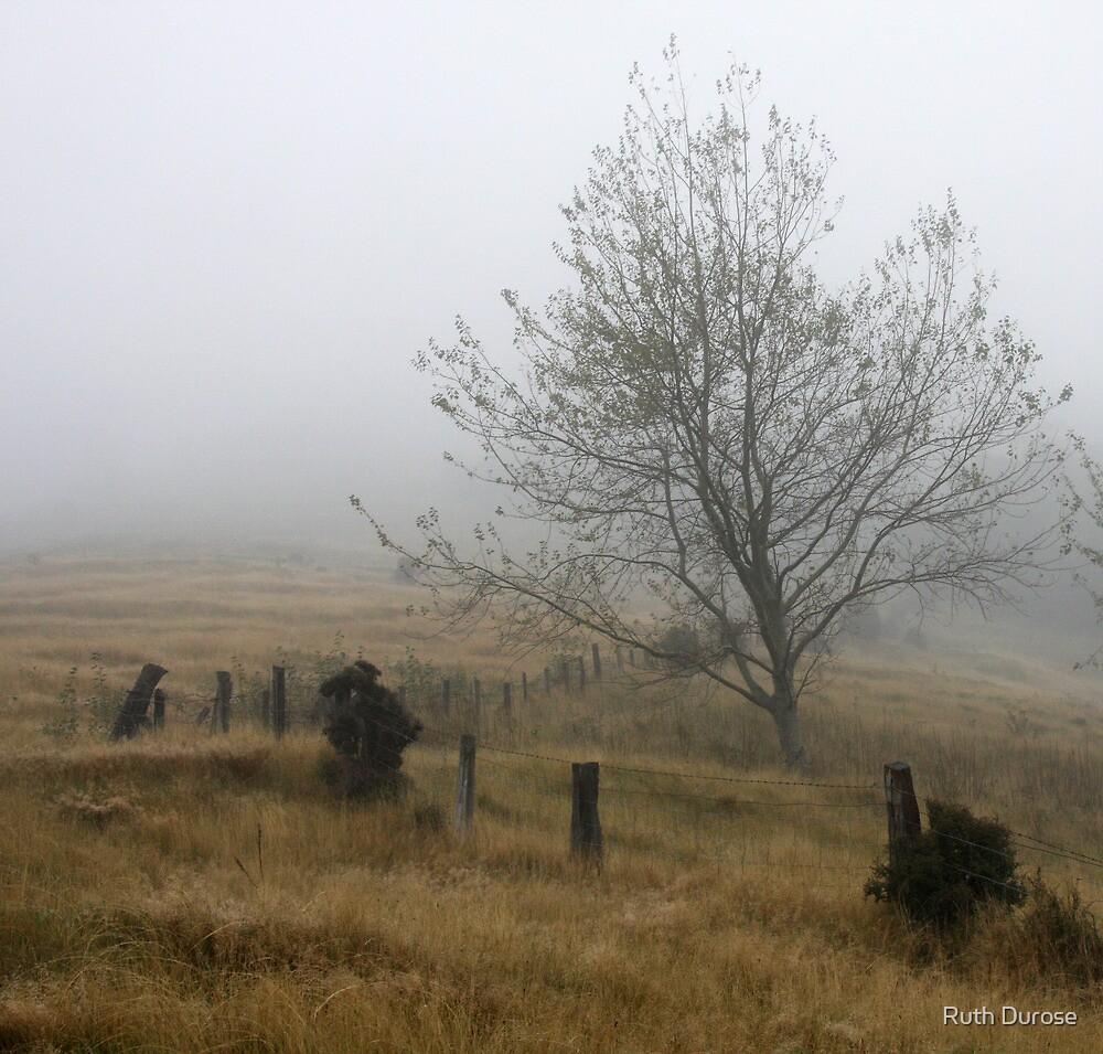 Misty Day - Onuku Farm - Banks Peninsular, New Zealand by Ruth Durose