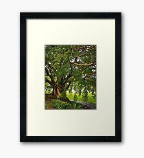 Bodhi Tree Framed Print