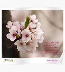 Project365: #5 Sakura Poster