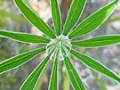 Lupine Leaf and Raindrop by MotherNature