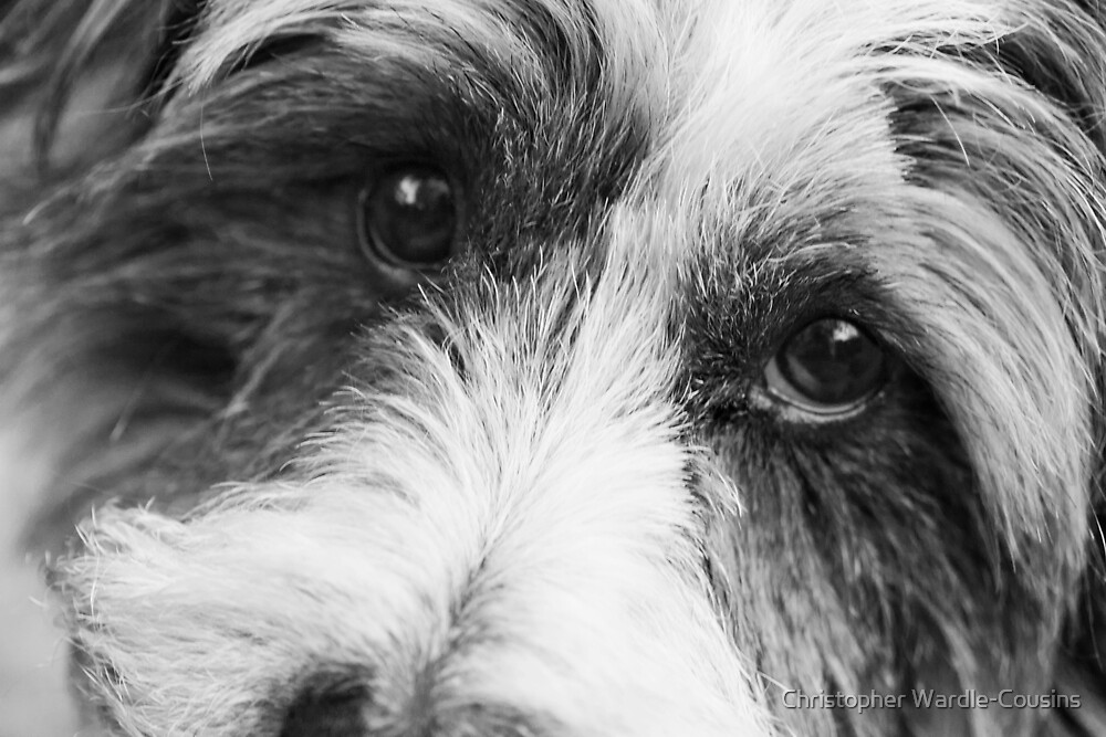 I'm watching you... by Christopher Wardle-Cousins