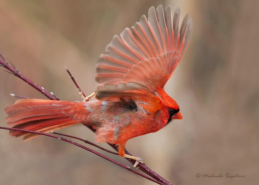 Northern Cardinal male by PixlPixi