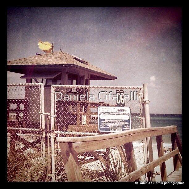 Palm Beach - Florida by Daniela Cifarelli