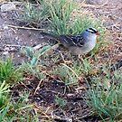 little bird by gabbielizzie