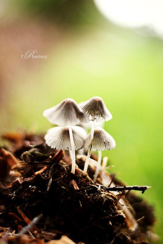 Tiny Magic World by fRantasy