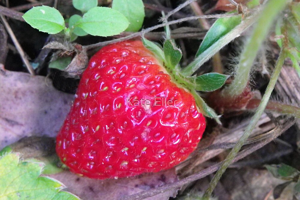 Giant Strawberry by Kate Eller