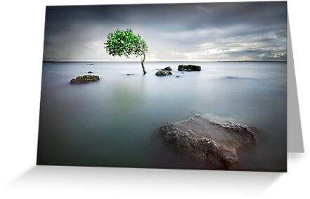 Zen Tide by Ben Ryan