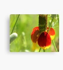 Mexican Hat with Florets Canvas Print