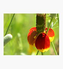 Mexican Hat with Florets Photographic Print