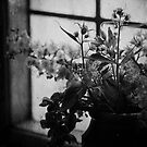 Jug of Flowers by Nikki Smith