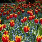 Sea of Tulips by bubblebat