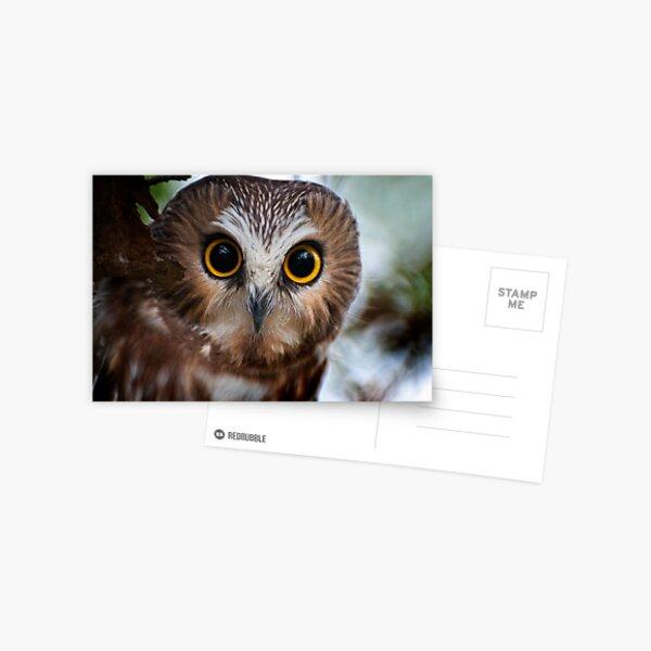 Northern Saw Whet Owl Portrait Postcard