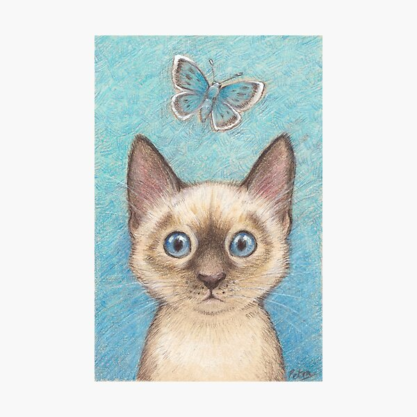 'Blue' - siamese kitten with butterfly Photographic Print