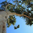 Under the Gum Tree by MyPerspective
