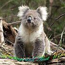 Koala in the Forest #1 - Australia by Bev Pascoe