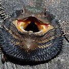 Pogona barbata (Eastern Bearded Dragon) 2 by Russell Mawson