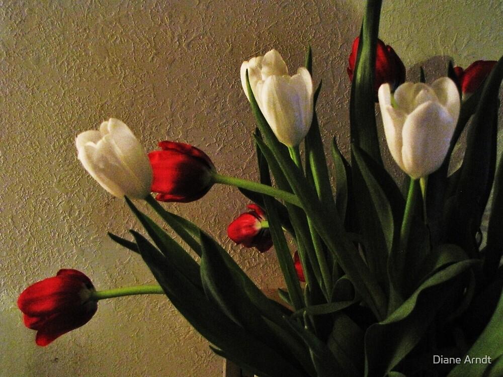 Tulips by Diane Arndt