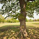 Tree Light & Shade by John Hare