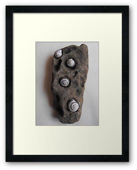 Shells In Stone by Tracy Wazny
