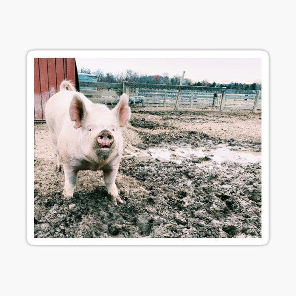 Menschlicher Sex mit Schwein
