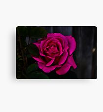 """ Hot Pink Rose "" Canvas Print"