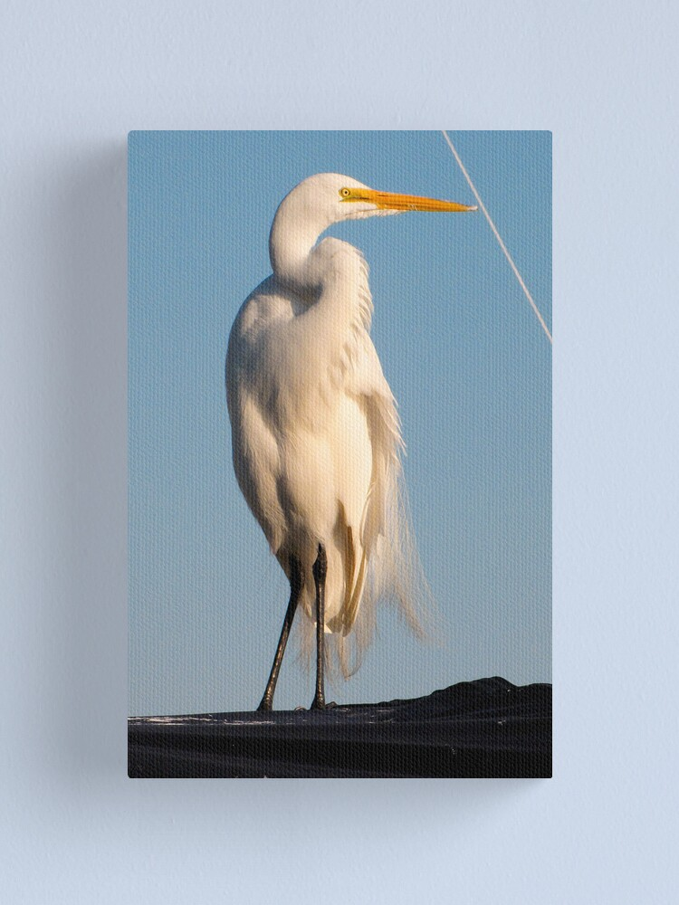 Alternate view of Great Egret and Line... Canvas Print