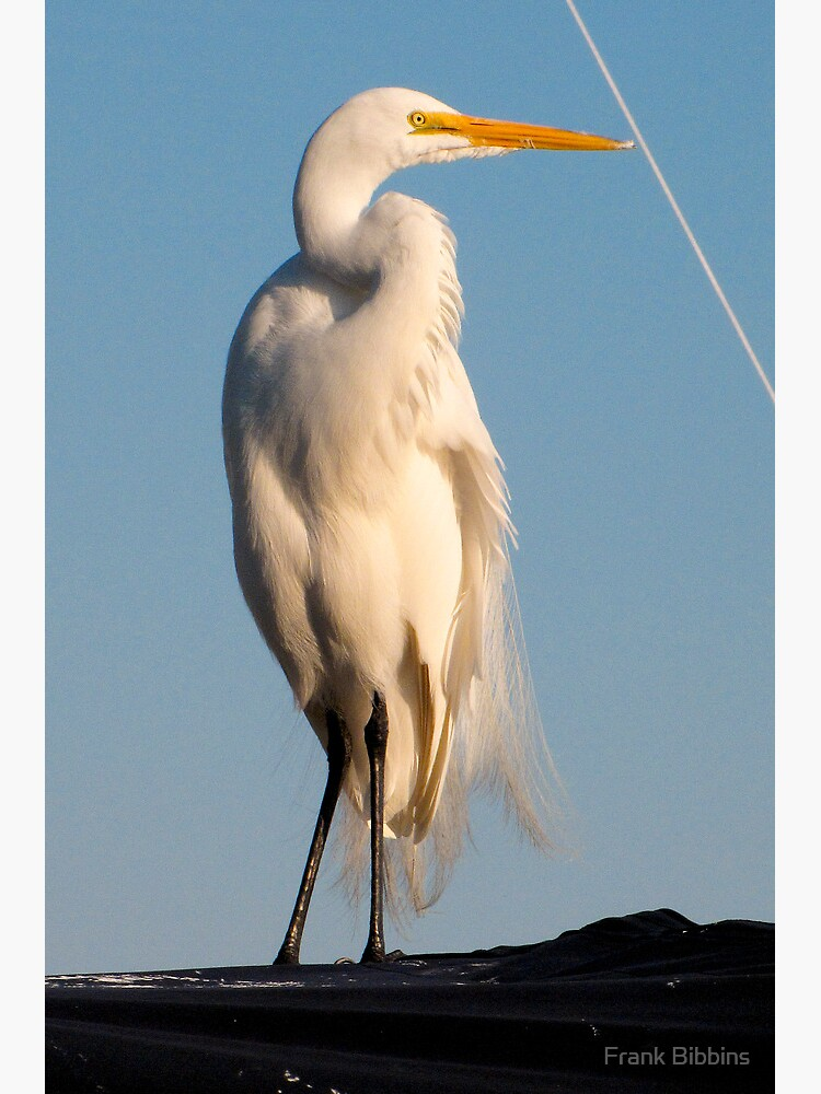 Great Egret and Line... by organicman2
