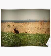 Lakeside Wildlife Poster