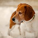 Textured Beagle Portrait by Peter O'Hara