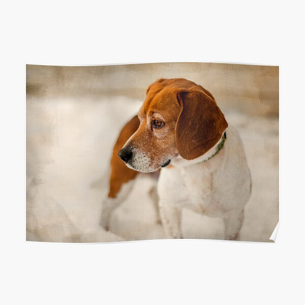 Textured Beagle Portrait Poster