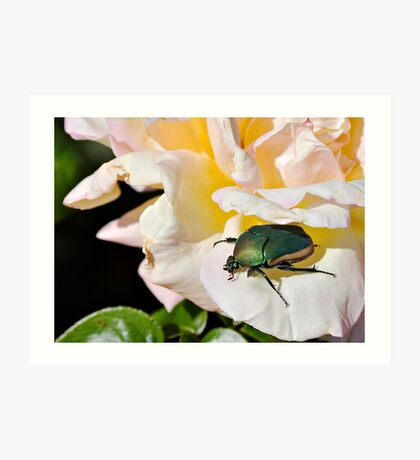 June Beetle Art Print