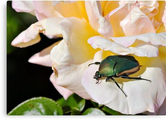 June Beetle by Michael  Moss
