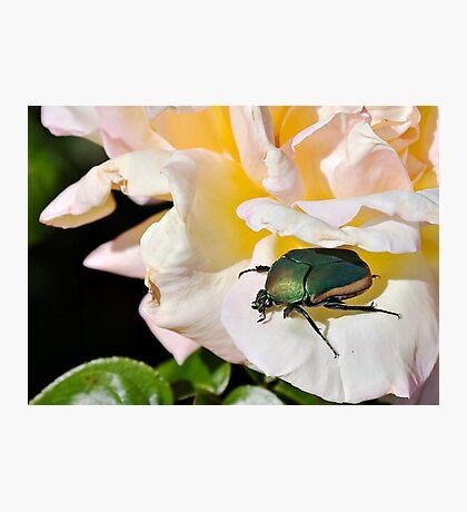 June Beetle Photographic Print